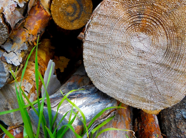 Textur kiefernholz baumstämme brennholz hintergrund