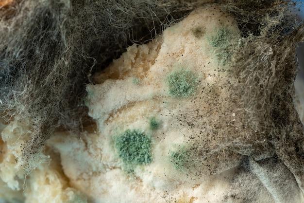 Textur von mehltau aspergillus fumigatus auf dem brot