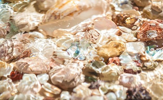 Textur von muscheln und perlen, die unter wasser am meeresufer liegen