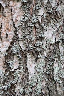 Textur von rindenholz als natürlicher hintergrund. textur von fichte und kiefer.
