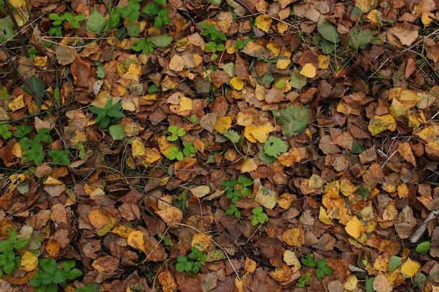 Textur von waldböden
