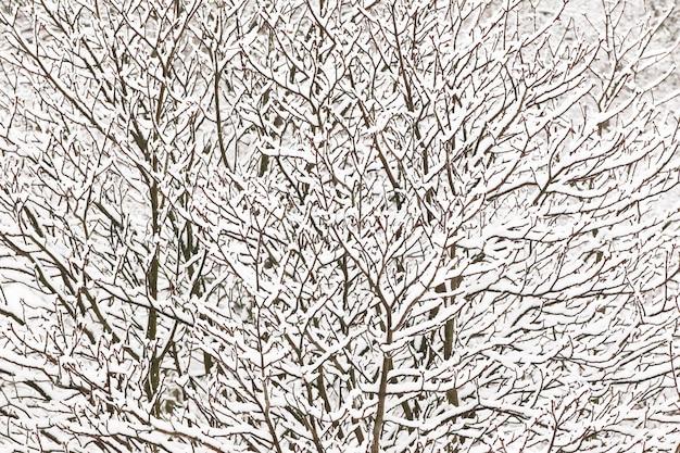 Textur von zweigen mit schnee bedeckt. wintermuster von schneebedeckten ästen