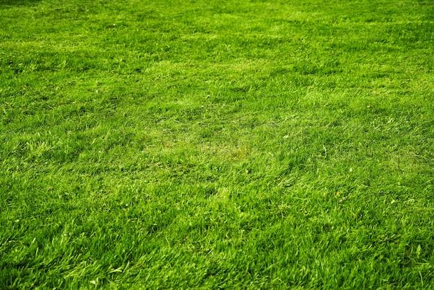 Texturgrün saftiges frisches gras im hintergrund an einem sonnigen tag