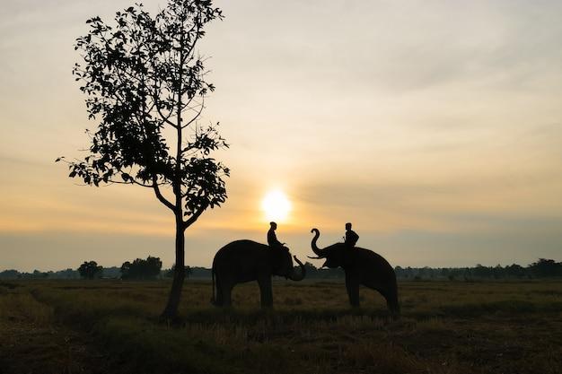 Thai elefant silhouette