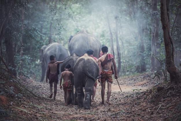 Thailänder sind mahout-elefanten für kontrollelefanten und für den tourismus mit elefanten