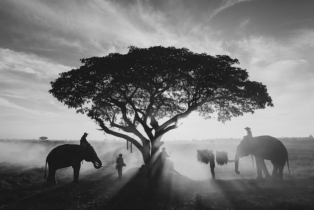 Thailändische bauern, die in den reisfeldern arbeiten