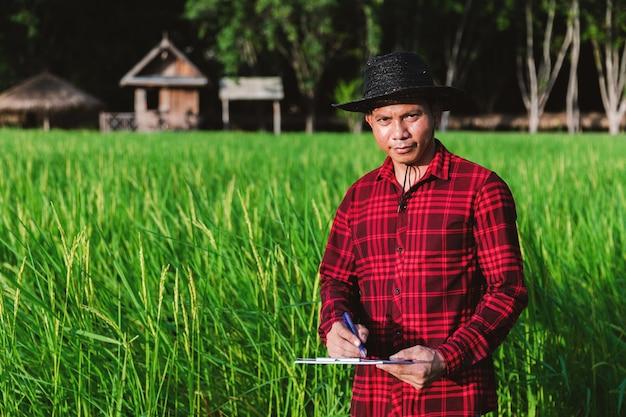 Thailändische bauern, die reisfelder in den feldern inspizieren