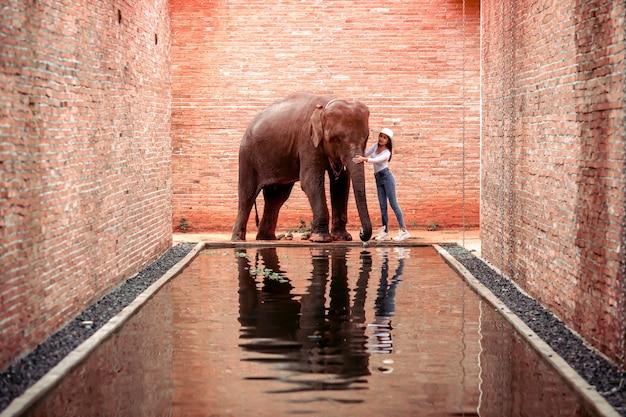 Thailändische elefanten, die im elephant learning center spazieren gehen; provinz surin; thailand
