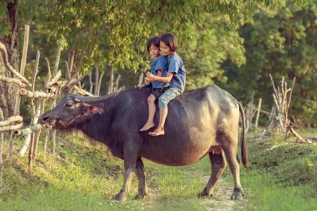 Thailändische landwirtkinder, die zusammen beim reiten eines büffels spielen.