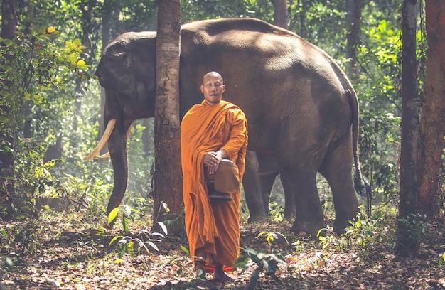 Thailändische mönche, die im dschungel mit elefanten gehen