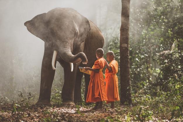Thailändische mönche, die im dschungel mit elefanten studieren