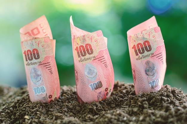 Thailändische währung mit 100 baht, die vom boden wächst