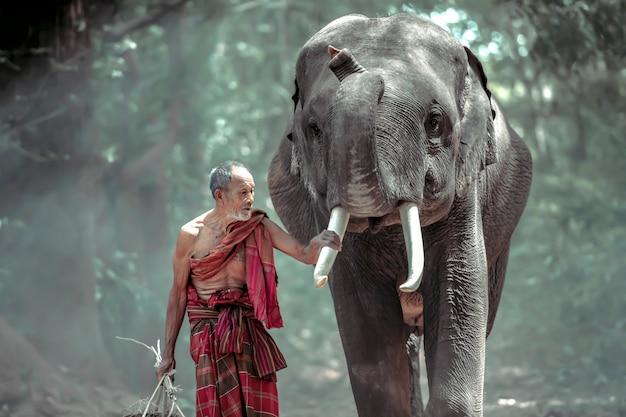 Thailändischer alter mann, der nach hause mit elefanten geht, nachdem die arbeit vom wald erledigt ist
