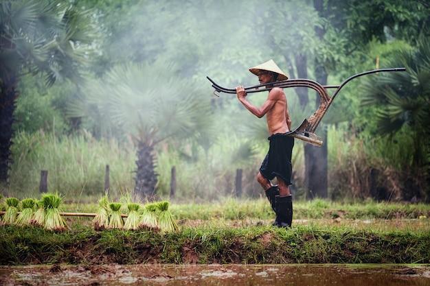 Thailändischer bauer arbeitet auf dem reisgebiet