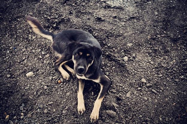 Thailändischer hund