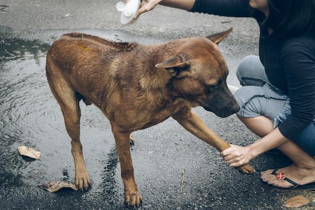 Thailändischer ridgeback hund, der eine dusche mit seife und wasser nimmt
