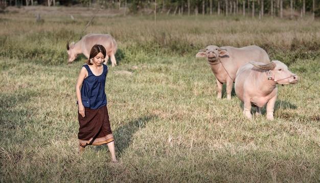 Thailändischer weiblicher landwirt mit einem büffel auf dem gebiet