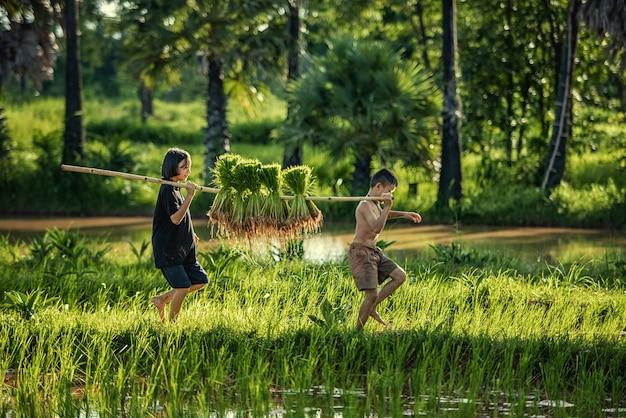 Thailand bauern reis pflanzen und reis in der regenzeit anbauen