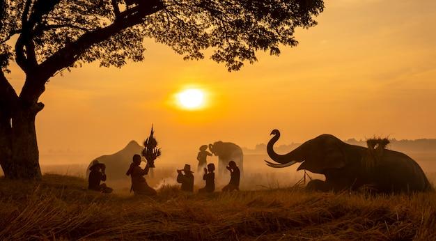 Thailand-landschaft; silhouettieren sie elefanten auf dem hintergrund des sonnenuntergangs, den elefanten, der in surin thailand thailändisch ist.