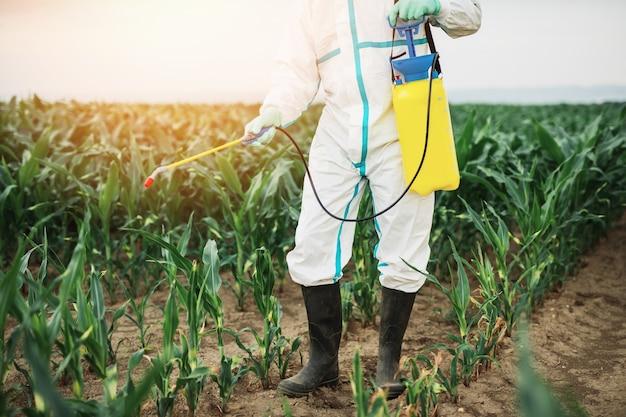 Thema industrielle landwirtschaft. mann sprüht giftige pestizide oder insektizide auf maisplantage.