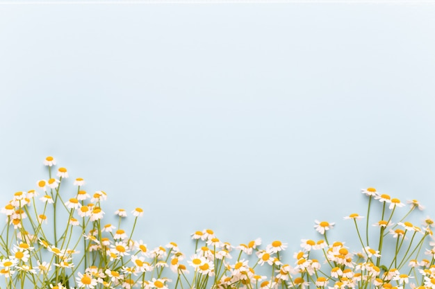Thema kamille aromatherapie, handgemachte kosmetik. platz für textessentielle und medizinische blumenkräuter