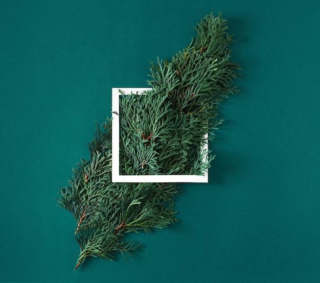 Thuja verzweigt in einem weißen papierrahmen auf einem grünen hintergrund. kreatives urlaubskonzept im minimalstil.