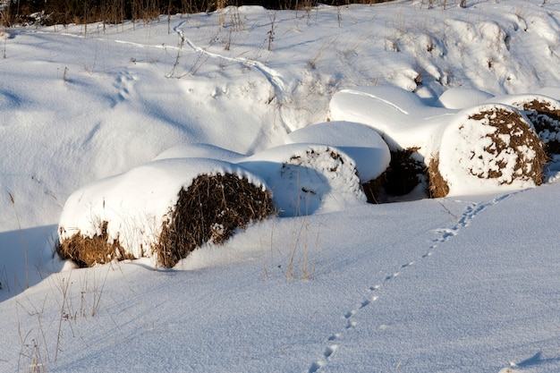 Tiefe schneeverwehungen in der wintersaison, schnee im winter ist gefroren, natur nach schneefall und schneestürme