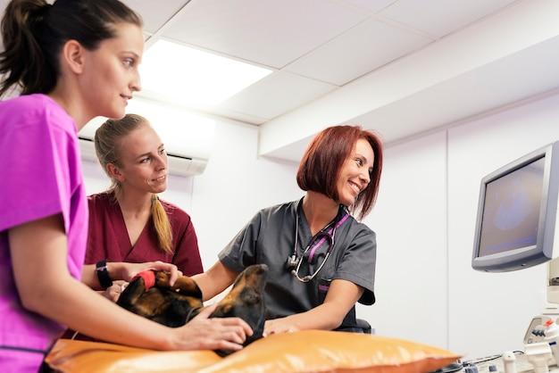 Tierärzte machen eine ultraschalluntersuchung eines süßen, schönen hundes. veterinär-konzept.