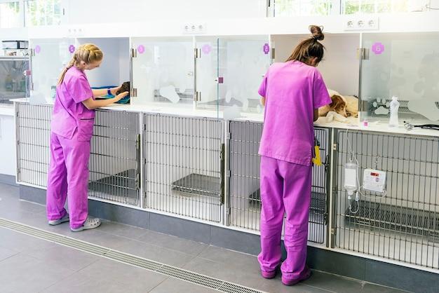 Tierärzte machen einen check-up von süßen krankheitshunden. veterinär-konzept.