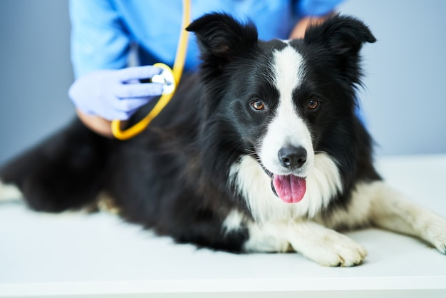 Tierärztin untersucht einen hund in der klinik