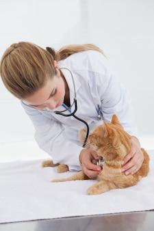 Tierarzt, der einen katzenherzschlag überprüft