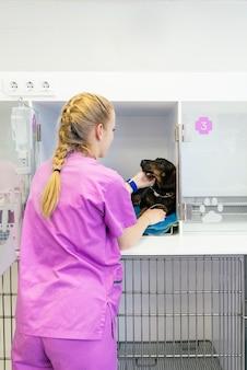 Tierarzt, der einen schönen hund umarmt. veterinär-konzept.