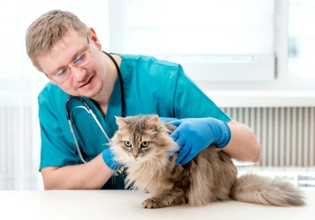 Tierarzt, der regelmäßige kontrolle von einer katze im veterinäramt macht