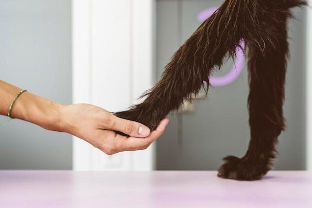 Tierarzt hält das bein des hundes. veterinär-konzept.