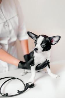 Tierarzt hält einen niedlichen schwarzweiss-welpen an der rezeption