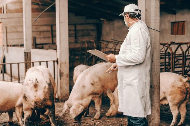 Tierarzt im weißen kittel, im hut und in der schutzmaske auf gesicht, das klemmbrett hält und schweine während des stehens in cote überprüft.