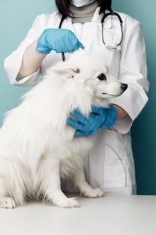 Tierarzt in uniform überprüft den ohrenhund auf dem tisch in der tierklinik.