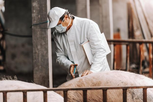 Tierarzt in weißem kittel und maske auf gesicht hält klemmbrett unter achselhöhle und spritzt schwein, während er in cote steht.