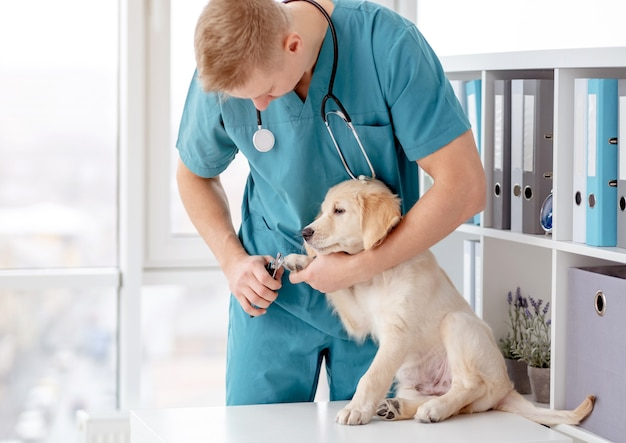 Tierarzt schneidet hundekrallen