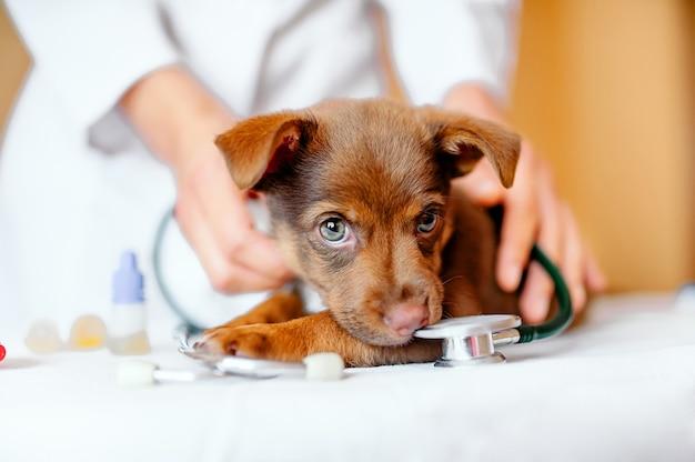 Tierarzt.