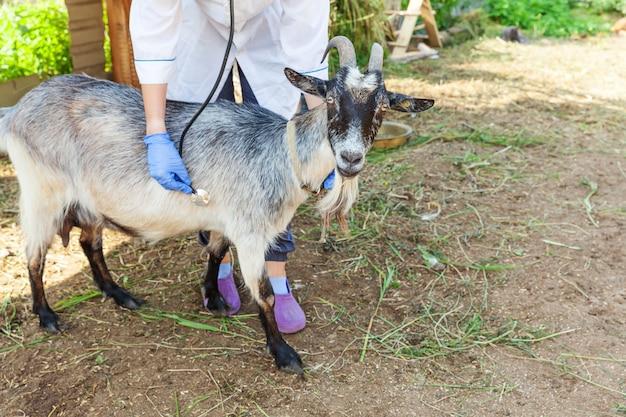 Tierarztfrau mit stethoskop, das ziege auf ranch hält und untersucht