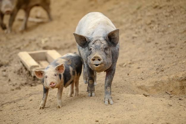 Tiere auf bauernhofrinderhuhn und -schwein in der landschaft im wald