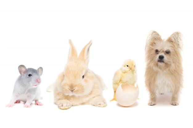 Tiere auf getrenntem weiß
