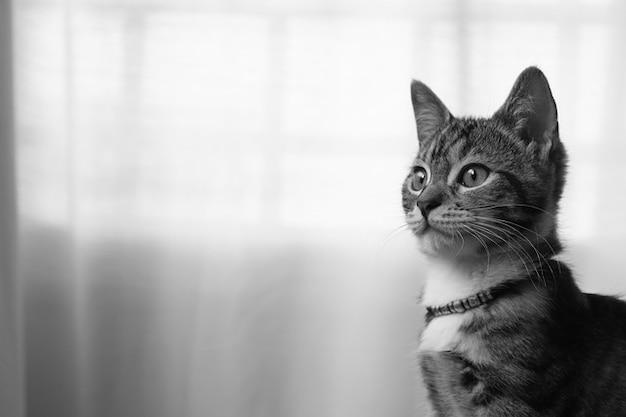 Tierisches katzenartige pet gata cat