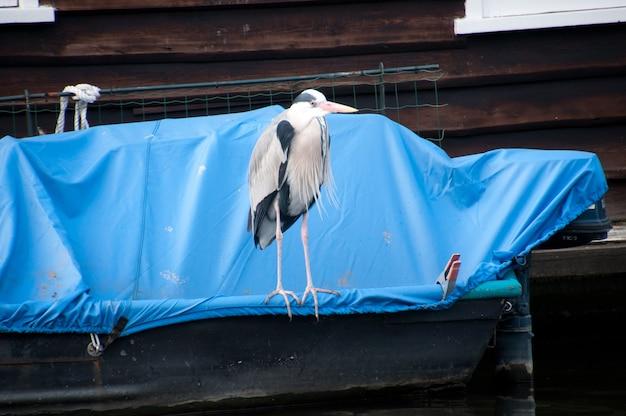 Tierleben in amsterdam, niederlande