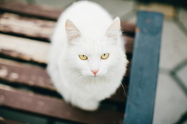 Tiernahaufnahme: fotografie einer weißen katze mit den traurigen gelben augen, die draußen auf einer braunen holzbank am bewölkten tag sitzen