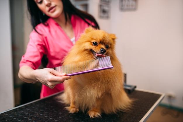 Tierpfleger mit kamm, hundewäsche im pflegesalon. professioneller bräutigam und frisur für haustiere