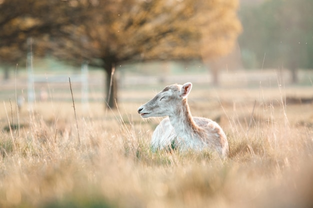 Tierselektiver fokus, selektiver fokus auf motiv, hintergrundunschärfe, während der zeit natur genial schönes neues schönes foto