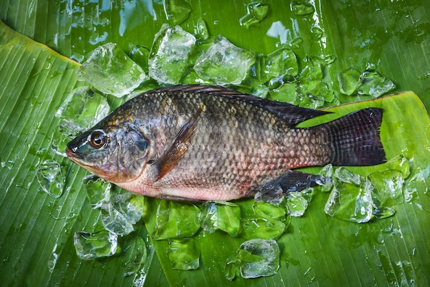 Tilapia fisch süßwasser zum kochen von speisen im asiatischen restaurant frische rohe tilapia mit eis auf bananenblatt