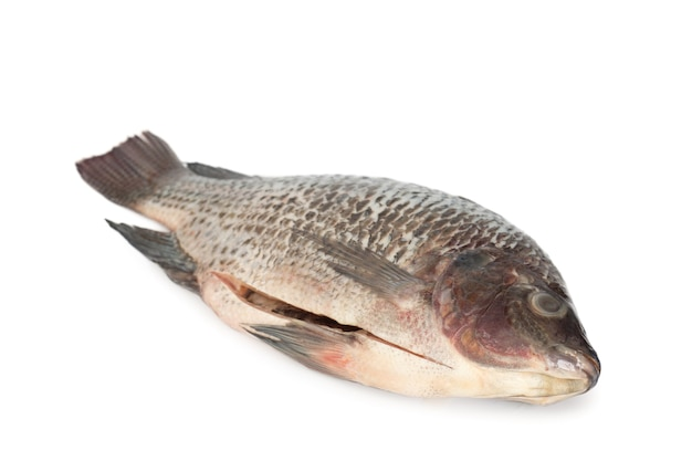 Tilapia-fisch (zum kochen skaliert und ausgenommen) auf weißem hintergrund.